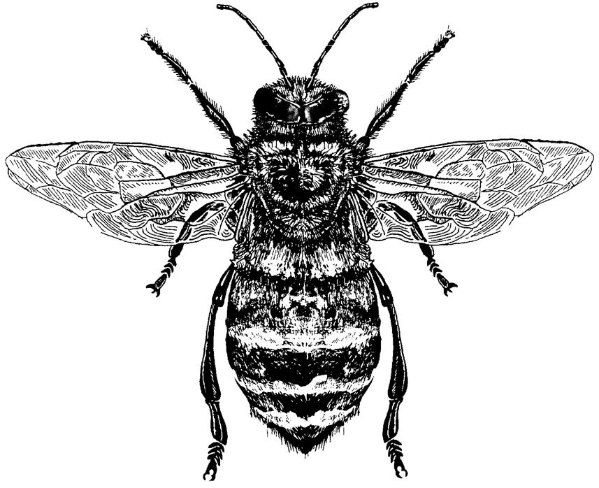 FKK_Insekten_Biene_weiss