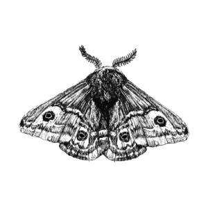 FKK_Insekten_Nachtpfauenauge_weiss