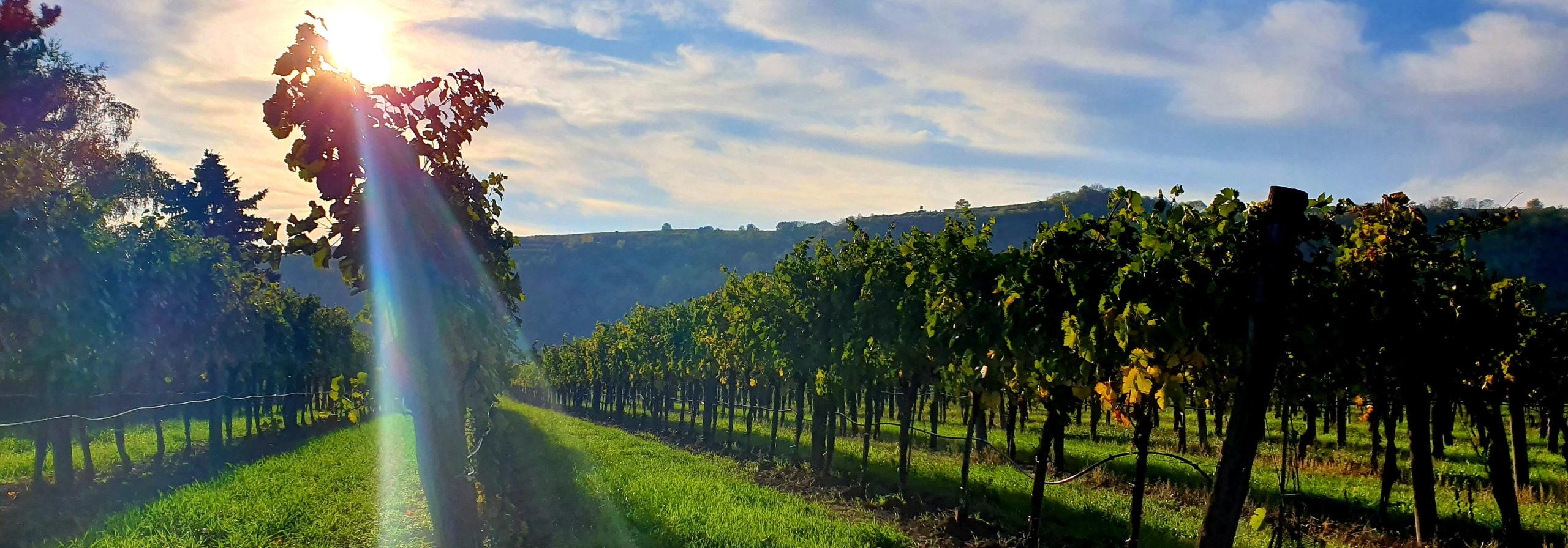 Das strengste Weingesetz der Welt