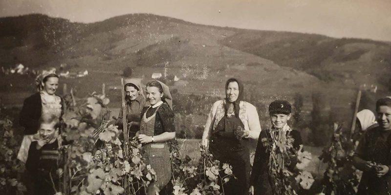 Weinlese (1954)